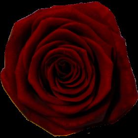 Tmavě červená (BRG)