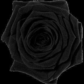 Černá (BLA)