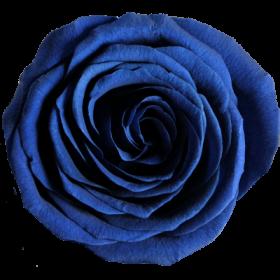 Modrá (RGL)