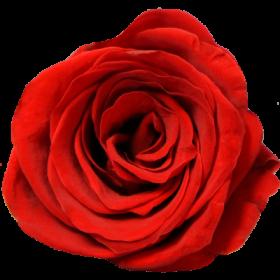 Červená (BRE)