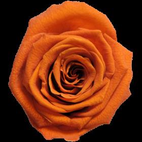 Oranžová (MOR)