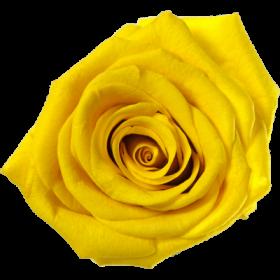 Žlutá (SYE)