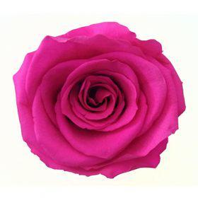 Teple růžová