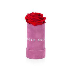 Sametový růžový